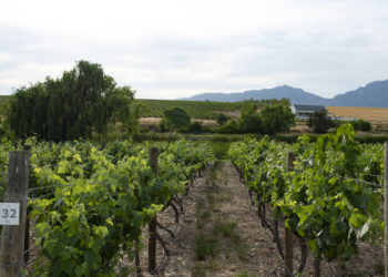 vinyards-and-surrounds17