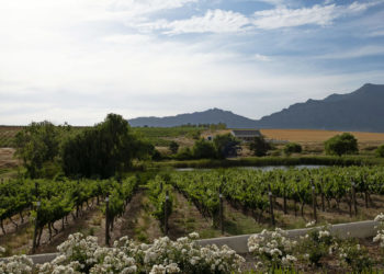 vinyards-and-surrounds6